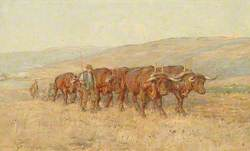 Oxen Ploughing, South Downs