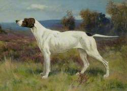 Study of a Pointer