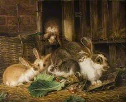 Five Rabbits