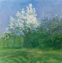 A White Blossom Tree