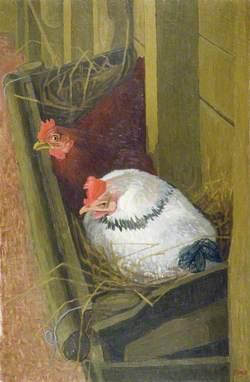 Broody Hens