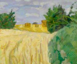 Harvest Cornfield