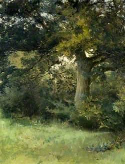 An Oak Tree, Green Hedges, East Grinstead, Sussex