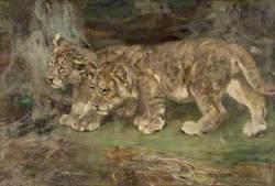 Lion Cubs, Suspicion