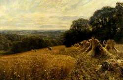 A Harvest Field