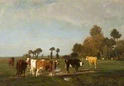 Landscape and Cattle