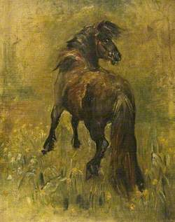 Oil Sketch of a Pony