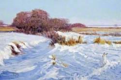 Prairie Creek in Winter