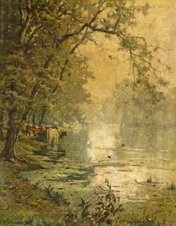 Cows in a Stream