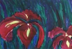 Scarlet Iris