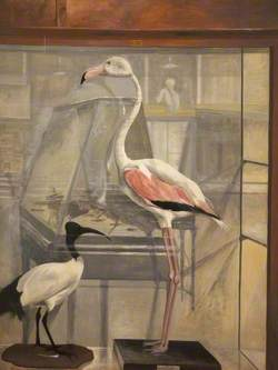 The Dead Flamingo, Interior of Bethnal Green Museum
