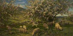 Apple Blossoms in the Upper Wye