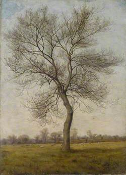 Study of an Ash Tree in Winter