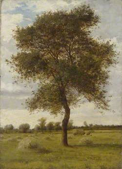 Study of an Ash Tree in Summer
