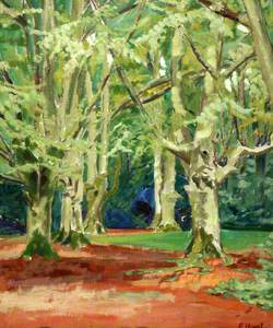 Beech Trees in the New Forest