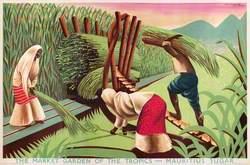 The Market Garden of the Tropics – Mauritius Sugar