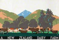 A New Zealand Dairy Farm