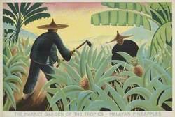 The Market Garden of the Tropics – Malayan Pineapples