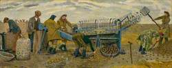 Potato Sorting, Berwick