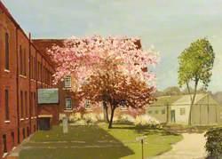 Cherry Blossom: South Hospital, St Mary's