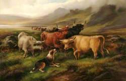 Highland Cattle in Mountain Scene