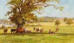 Gypsy Horses on Merry Hill, Bushey