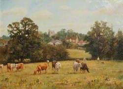 Cattle Grazing in Haydon Dell