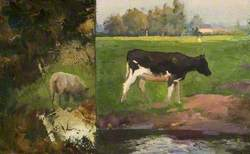 Studies of a Cow and a Sheep