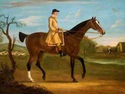 Huntsman on a Bay Horse