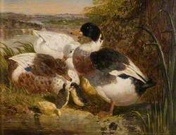 Ducks and Ducklings in a Landscape