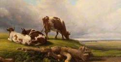 Extensive Landscape with Cows