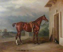 'Orion', a Chestnut Hunter Outside a Stable