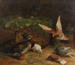 Mallards and Pigeons