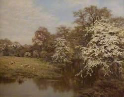 Hawthorn Blossoms