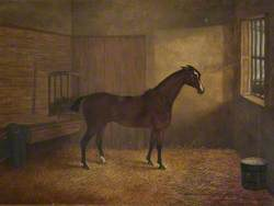 Family Horse in Stables