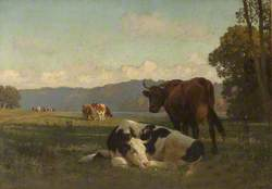 Cattle on Riverbank in Auvergne