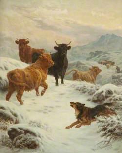Scotch Rebels