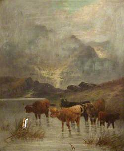 Cattle Wading in a Lake