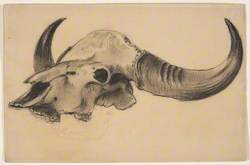 Cow or Bison Skull