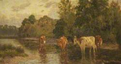 Cattle in a Shallow Stream