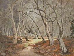 Woodland Scene, Burnham Beeches