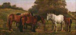 Group of Horses and a Foal