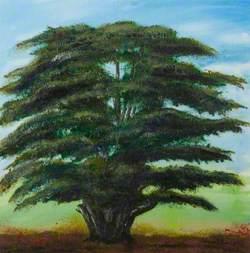 The Birstall Cedar Tree