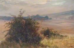 Chingford Plain in Summer