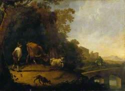 A Man Driving Cows