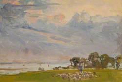 Sheep by Estuary