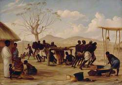 Manufacture of Sugar at Katipo