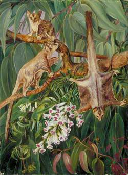 Foliage of a Gum Tree and Flowers of Tecoma with Flying Opossums