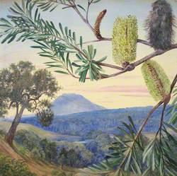 Banksia of Tasmania