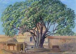 Peepul Tree, Srirangam, Tamil Nadu, India